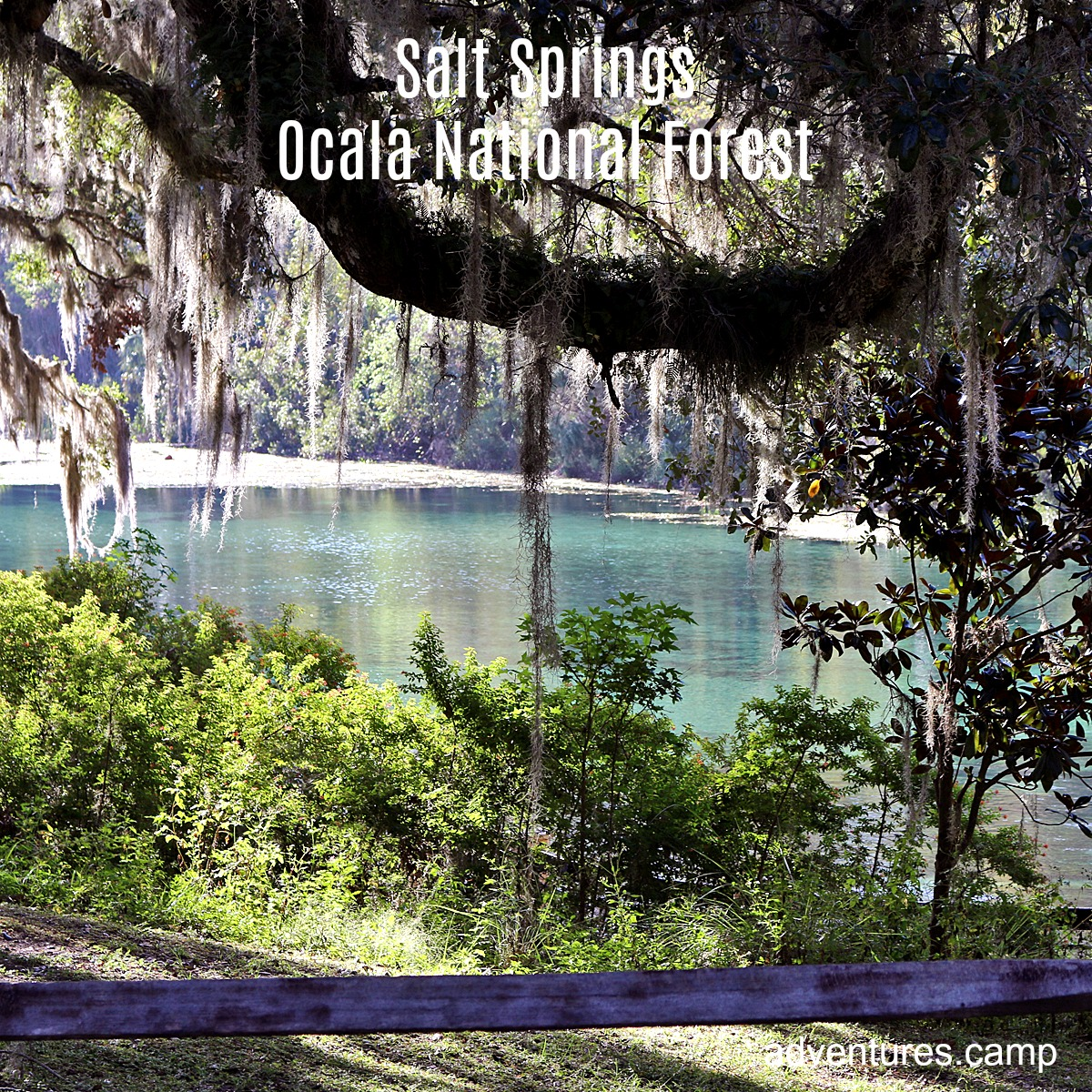Salt Springs Ocala National Forest